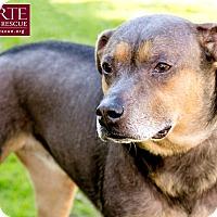 Adopt A Pet :: Mona - Marina del Rey, CA