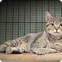 Adopt A Pet :: Adrianna - Marlinton, WV