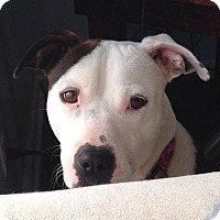Adopt A Pet :: Charlie - Dayton, OH