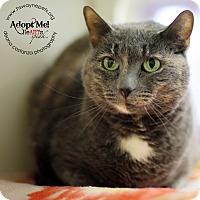 Adopt A Pet :: Daphne - Lyons, NY