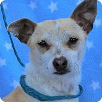 Adopt A Pet :: MOE - Red Bluff, CA