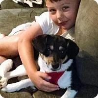 Adopt A Pet :: Morgan - Cary, NC