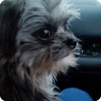 Adopt A Pet :: Dax - Elkhart, IN