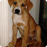Adopt A Pet :: Russell - Winchester, VA