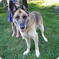 Adopt A Pet :: Kia - Louisville, KY
