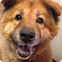 Adopt A Pet :: Tedi - Phoenix, AZ