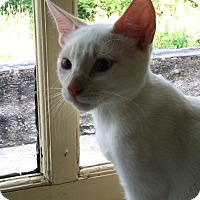 Adopt A Pet :: Sir Lancelot - Philadelphia, PA