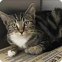 Adopt A Pet :: Katie - Sherwood, OR