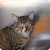 Adopt A Pet :: Joey - Sierra Vista, AZ