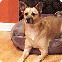 Adopt A Pet :: Dixie - Castro Valley, CA