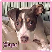 Adopt A Pet :: Hope - Jasper, IN