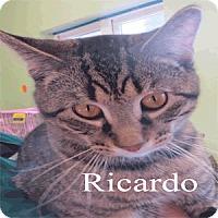 Adopt A Pet :: Ricardo - Warren, PA