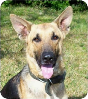 German Shepherd Dog Dog for adoption in Pike Road, Alabama - Trooper