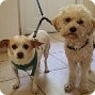 Adopt A Pet :: Brownie & Coco - VIDEO
