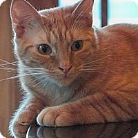 Adopt A Pet :: Roger - Secaucus, NJ