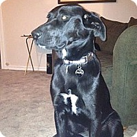 Adopt A Pet :: Molly - Justin, TX