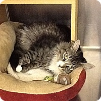 Adopt A Pet :: Nancy - Colmar, PA