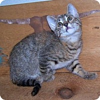 Adopt A Pet :: K-Lillian2-May - Colorado Springs, CO