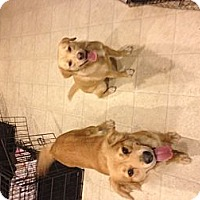 Adopt A Pet :: Nelly - selden, NY