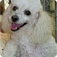 Adopt A Pet :: Maxie - Mooy, AL