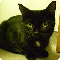 Adopt A Pet :: Destiny - Hamburg, NY