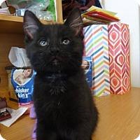 Adopt A Pet :: Super Chunk - Colmar, PA