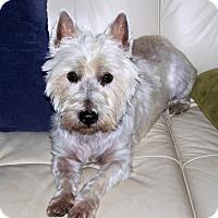 Adopt A Pet :: Elvis - Chicago, IL