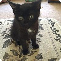 Adopt A Pet :: George - Monroe, GA