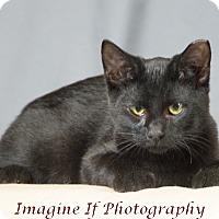 Adopt A Pet :: Clay - Oklahoma City, OK