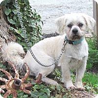 Adopt A Pet :: MAXX - Bedminster, NJ