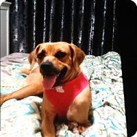 Adopt A Dog Melbourne Florida