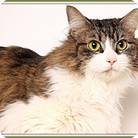 Adopt A Pet :: Koa - Glendale, AZ