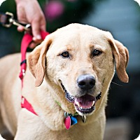 Adopt A Pet :: Charmin - Houston, TX