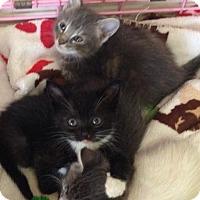 Adopt A Pet :: Meredith $125 - Seneca, SC