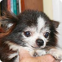 Adopt A Pet :: Cody - Umatilla, FL
