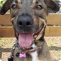 Adopt A Pet :: HOLLY - Los Angeles, CA