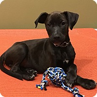 Adopt A Pet :: Ida - New Oxford, PA