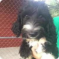 Adopt A Pet :: Stache - Lindale, TX
