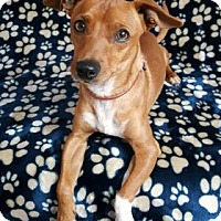 Adopt A Pet :: Civic - Yucaipa, CA