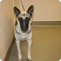 Adopt A Pet :: Gema - Wildomar, CA