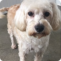 Adopt A Pet :: Ruby - Thousand Oaks, CA