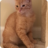 Adopt A Pet :: Alexander - New Albany, OH