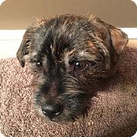 Adopt A Pet :: Deuce - Mary Esther, FL