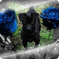 Adopt A Pet :: INK - Crowley, LA