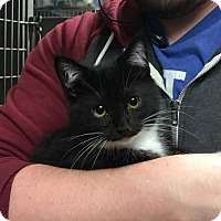 Adopt A Pet :: Chance - Paducah, KY
