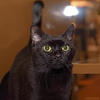 Adopt A Pet :: Boo - Morgan Hill, CA