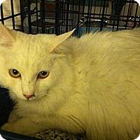 Adopt A Pet :: Ming - Santa Monica, CA