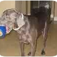 Adopt A Pet :: Keenan - Eustis, FL