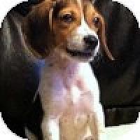Adopt A Pet :: Gemma - Novi, MI