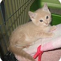 Adopt A Pet :: Laredo - Shelton, WA
